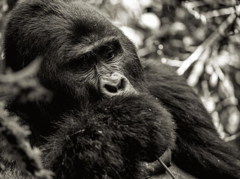 Uganda_T_Gor-1705.jpg