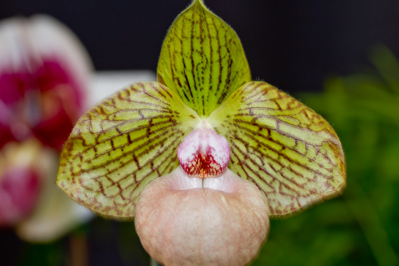 SF_Orchid_Show-35.jpg