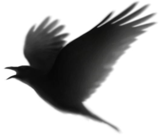 Raven 5.png