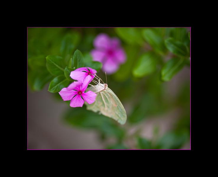 moth 1 small.jpg