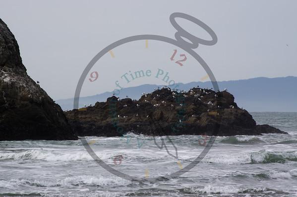 Ocean Beach 2011