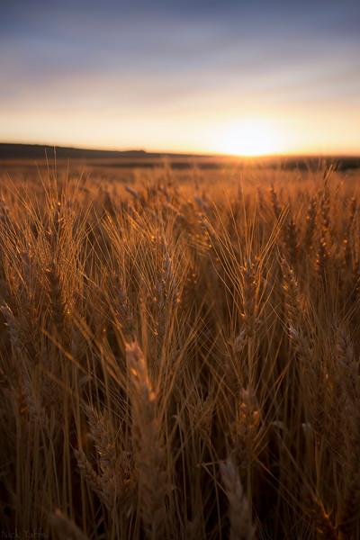 Glowing Grains