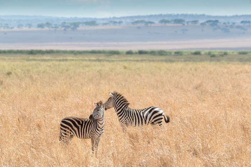 Africa - 102116 - 8215.jpg