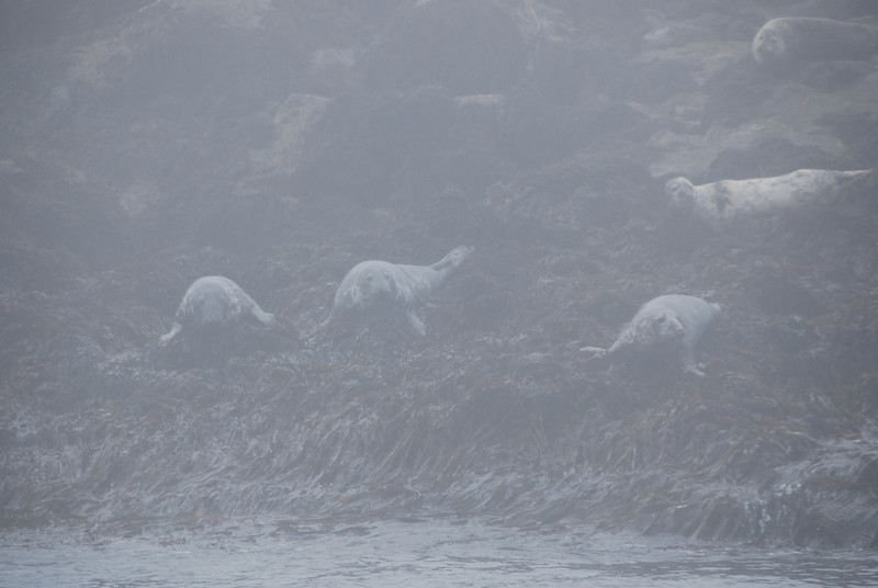 Machias Seal Island Trip - 132