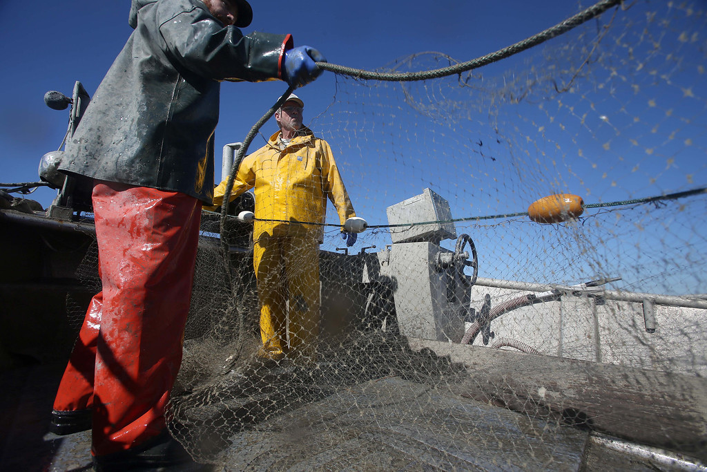 . Captain Larry Conrad, of Santa Rosa, right, and crew member Julian Thorn, of Sebastopol, haul in their nets as they fish for herring off Point Richmond near Brooks Island in Richmond, Calif., on Thursday, Feb. 14, 2013.  (Jane Tyska/Staff)