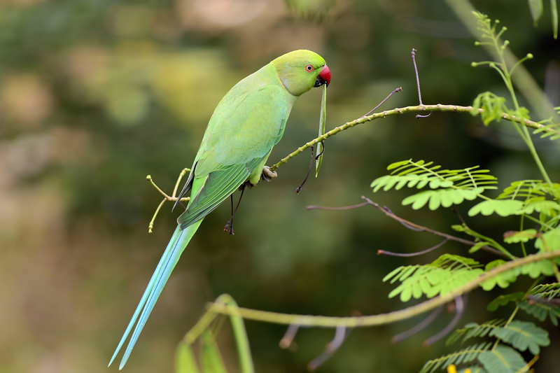 Parakeet-with-snack.jpg