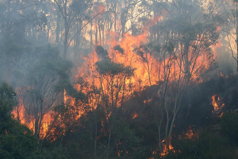 11. Australia Bushfires_15.JPG