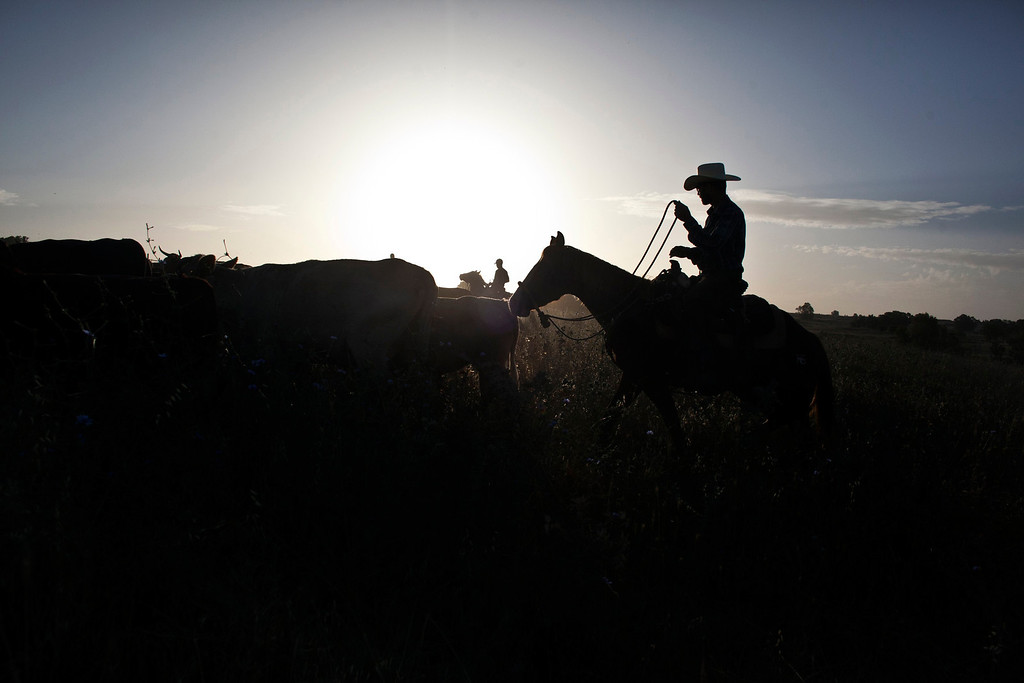 . Alon, an Israeli cowboy, tends cattle on a ranch just outside Moshav Yonatan, a collective farming community, about 2 km (1 mile) south of the ceasefire line between Israel and Syria in the Golan Heights May 21, 2013. REUTERS/Nir Elias