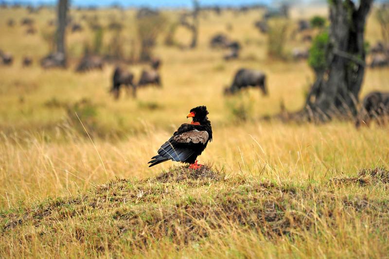 Africa 2010-163.jpg
