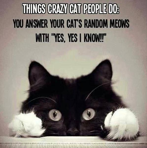 PETS_Cats_1486635_691220867568730_1615462662_n.jpg