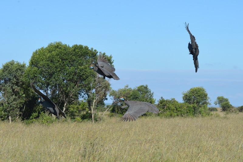 East Africa Safari 43.jpg