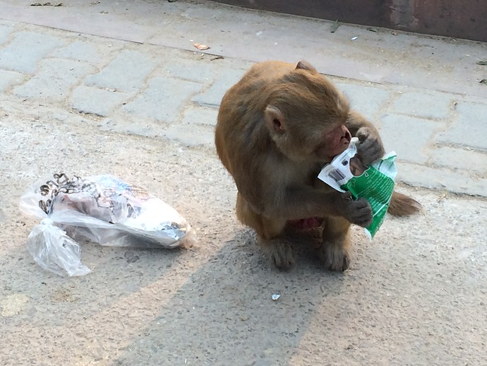 monkey eating candy