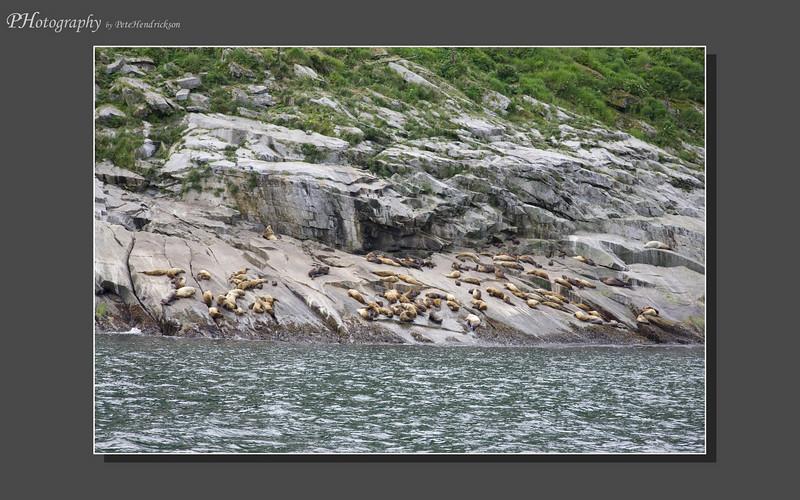 My Alaska 12-08-107.jpg