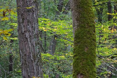 Sugarcreek Woodland
