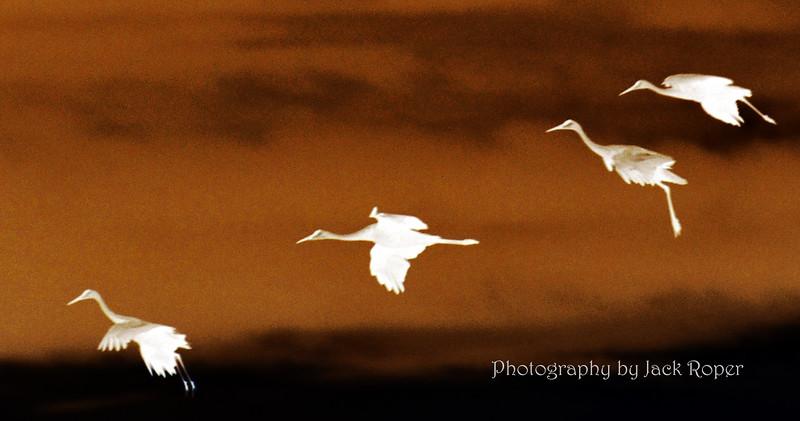 04 Crane Landing .jpg