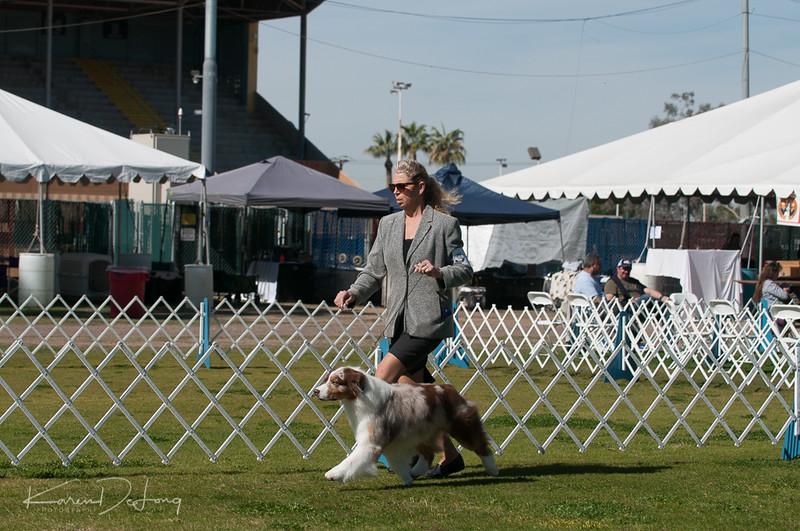 20170205_Australian Shepherds_Lost Dutchman Kennel Club-186.jpg