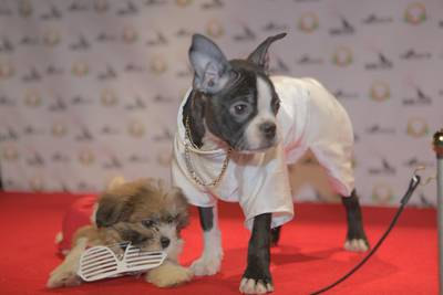 ". Animal Planet\'s ""The Year in Pup Culture.\"" Description: Kanye and Kim."