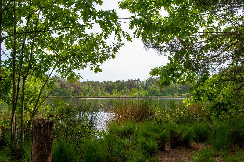 Nationaal Park Hoge Kempen - Duinengordel, omgeving Donderslag 29.jpg