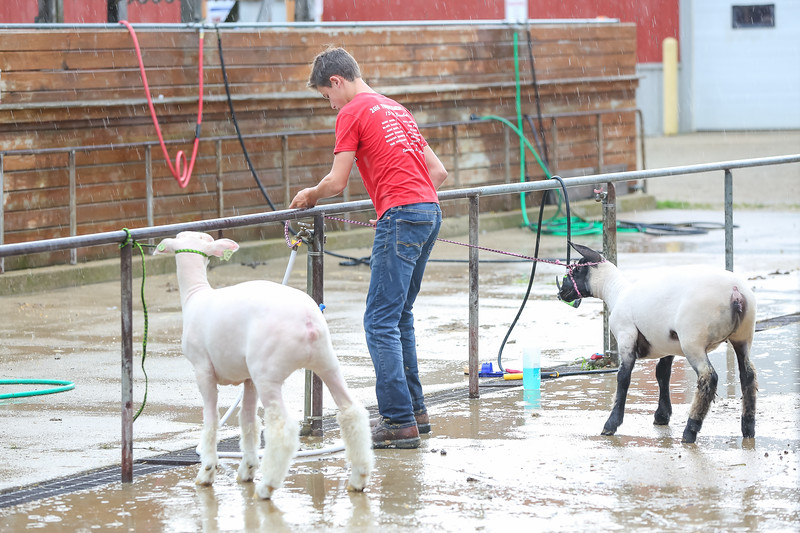Sheep Show-5.jpg