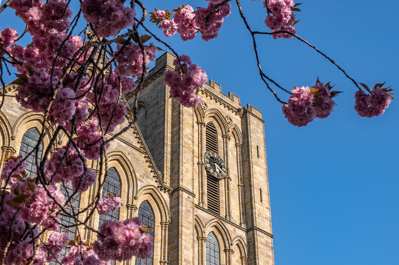 Ripon Cathedral & cherry blossom-53.jpg