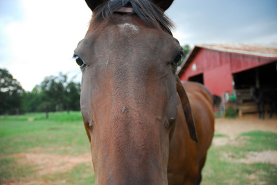 Mallory - Horse Ridin