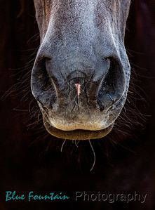 Equine Photo Shoots
