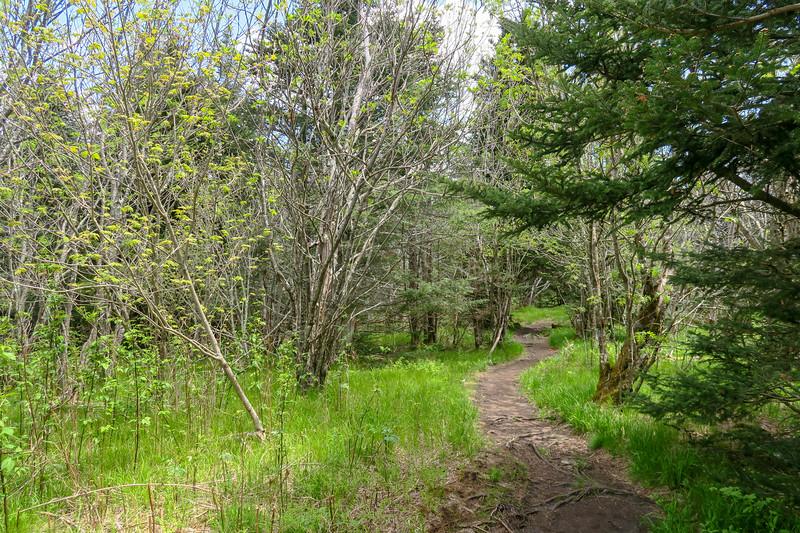 Mountains-to-Sea/Art Loeb Trail -- 5,970'