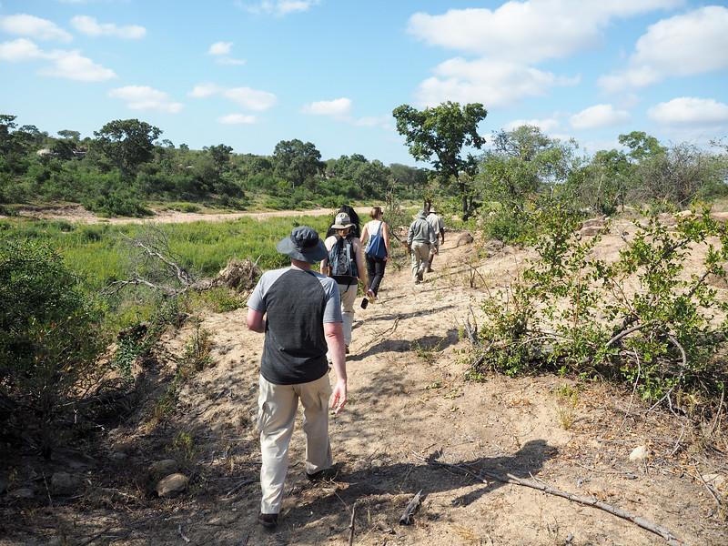 Walking safari in Kruger National Park