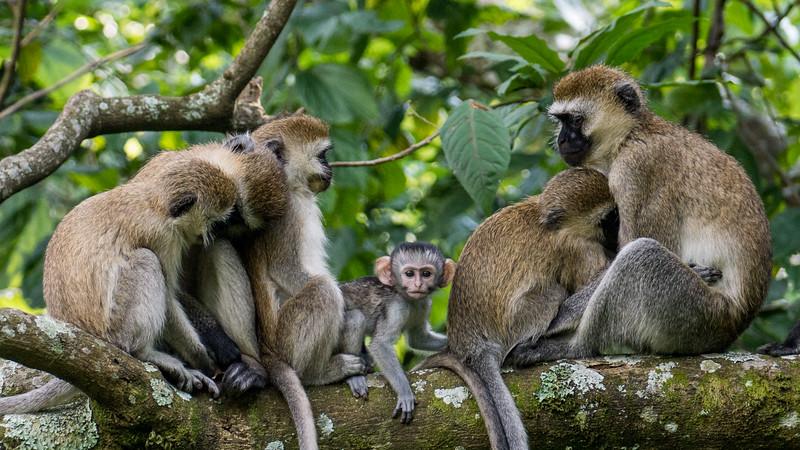 Nyugwe-Rwanda-62.jpg