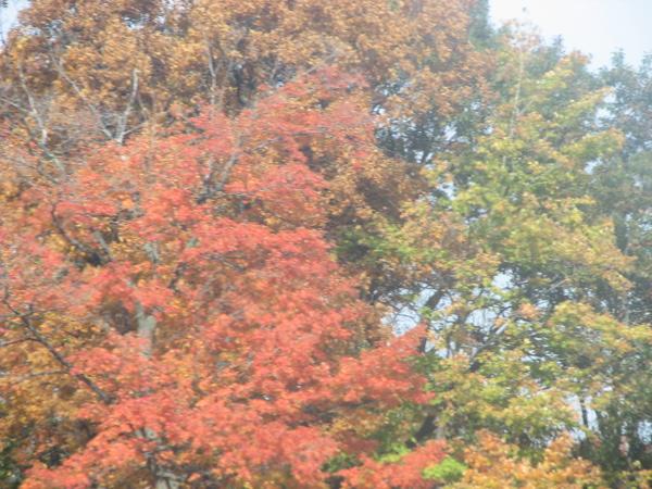 Fall pics 2008 057.jpg