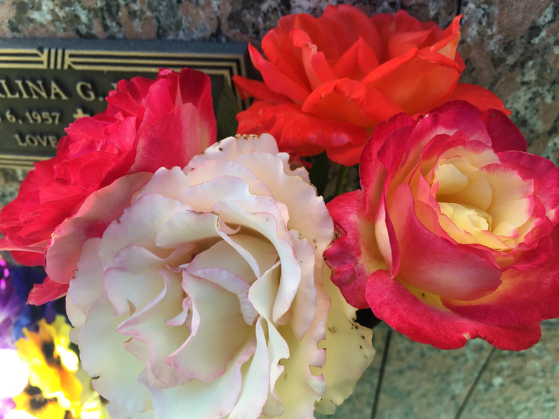 last of the roses.jpg