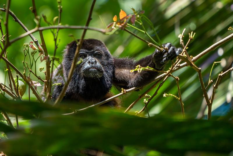 Costa Rica-1248.jpg