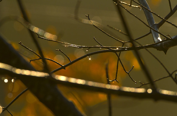 raindrops at sunrise