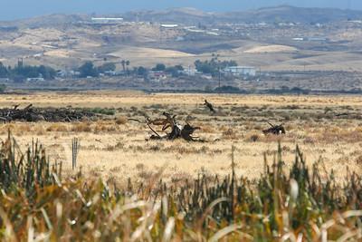 Tule Elk Reserve