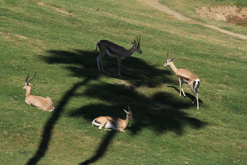 San Diego wild animal pakr 201700039.jpg