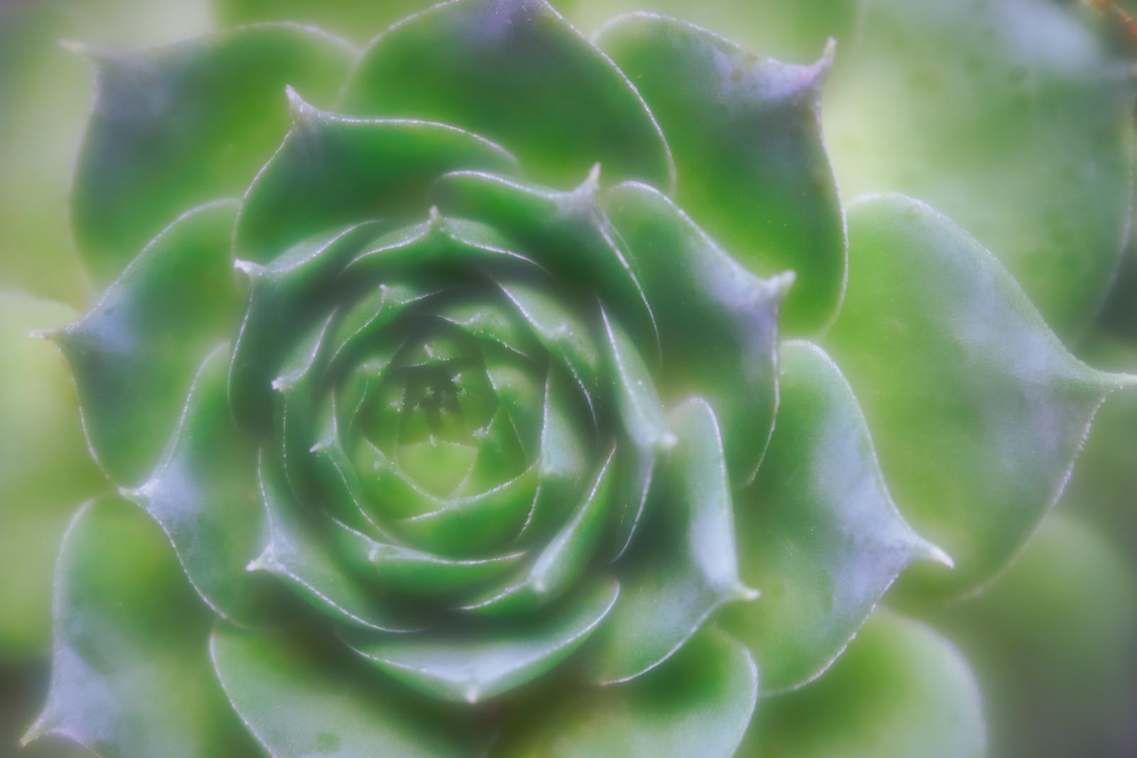 IMAGE: https://photos.smugmug.com/photos/i-PthPh6p/0/5d27d611/X3/i-PthPh6p-X3.jpg