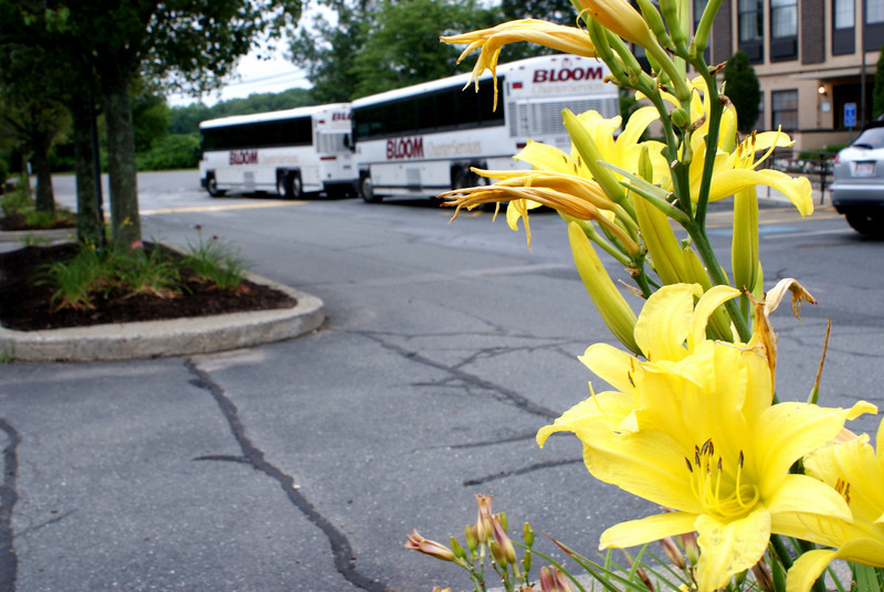 Summer is here! The flowers are in bloom and so are the busses