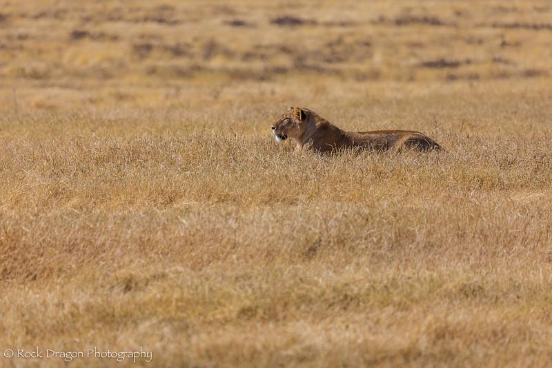 Ngorongoro-20.jpg
