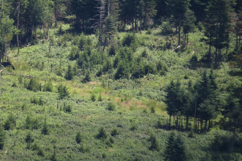 Meadow to visit.JPG