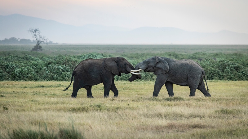 Elephant Fight (1 of 1).jpg