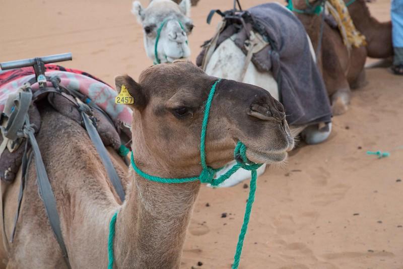 160924-125850-Morocco-0127.jpg
