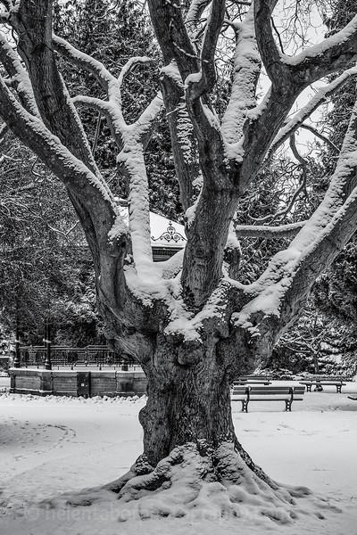 more snow in Ripon-5.jpg