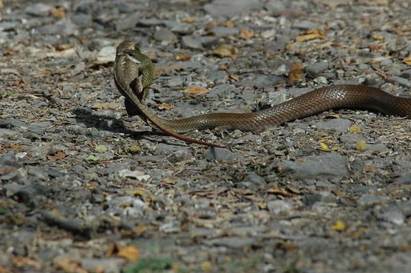 Snake Ecuador