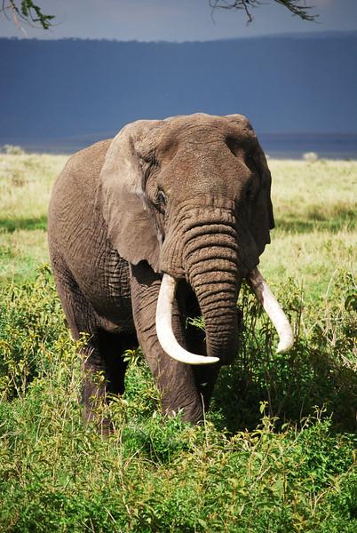 Ngorongoro (286).JPG