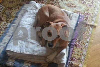 questions-and-answers-on-dogs-and-ebola-risks