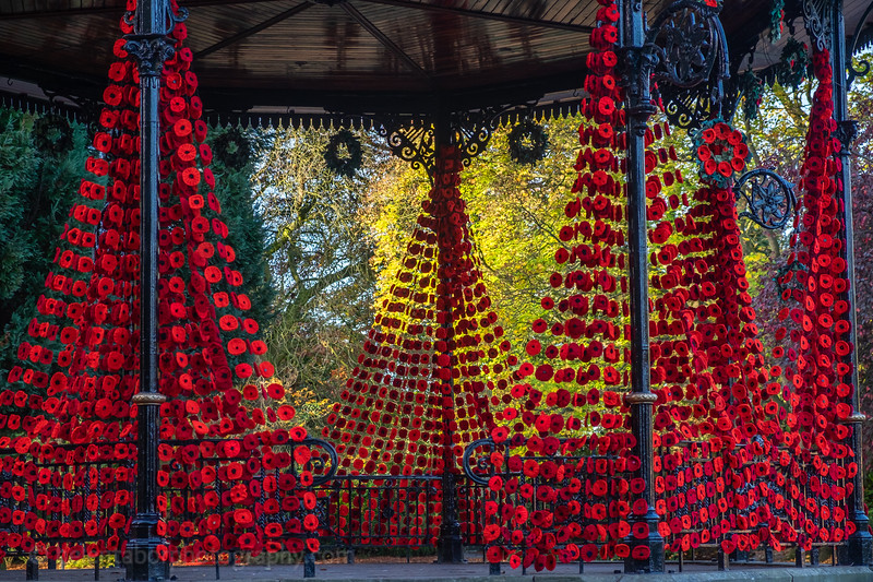 Spa Gardens poppies-35.jpg