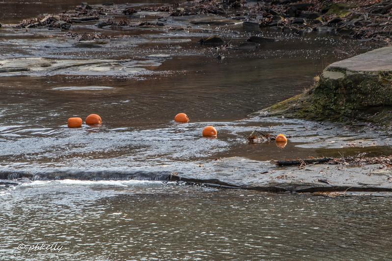 BR pumpkins 120819-2.jpg