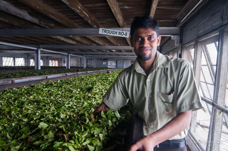 Dambutenne Tea Factory