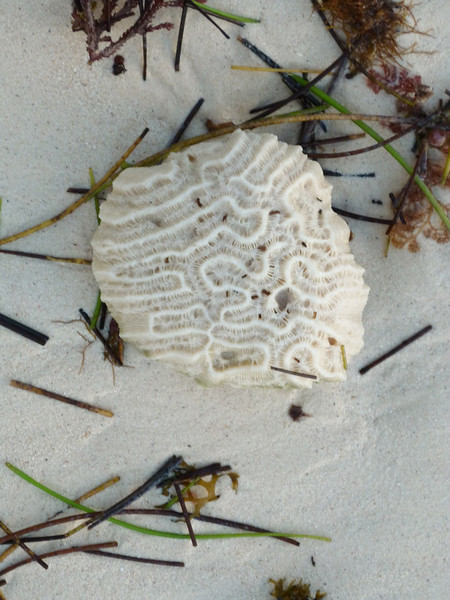 Coral and seagrass washed ashore.