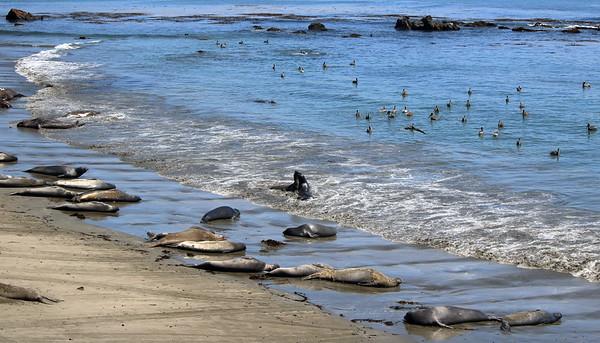 California Central Coast - June 2020